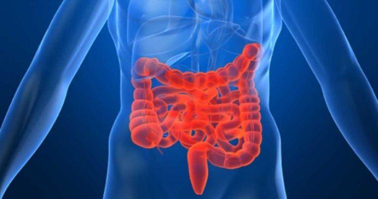 digestive-system-760x400
